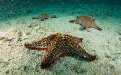 Poem – Under Water